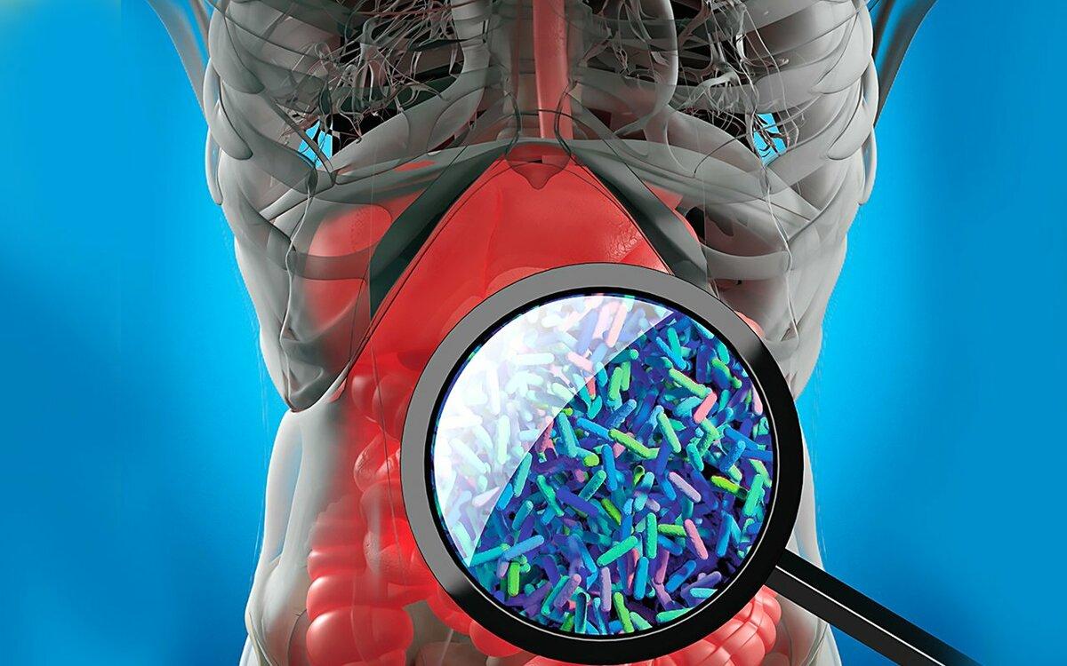 В теле человека обитает три килограмма бактерий