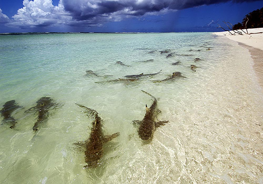 Идеальный пляж для постапокалиптического фестиваля